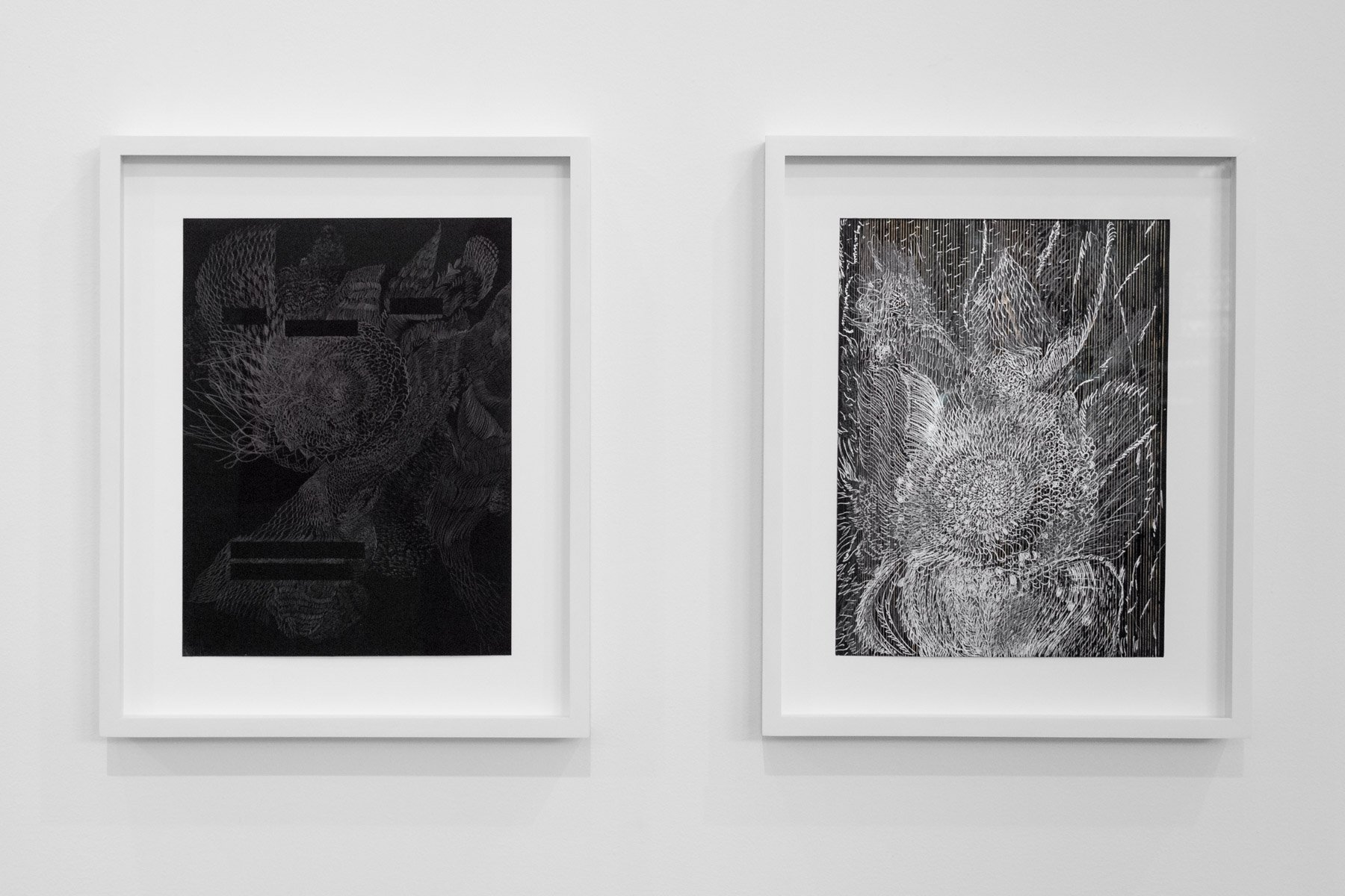 installation view of two drawings by Bahar Behbahani.